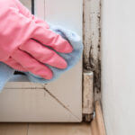 Mold Mildew Fungus Remediation